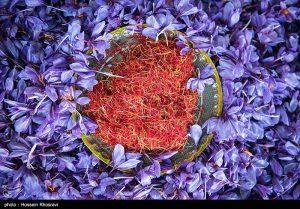 رنگ زعفران ایرانی