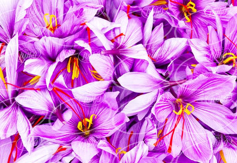 قیمت زعفران 5 مثقالی با بسته بندی های مختلف