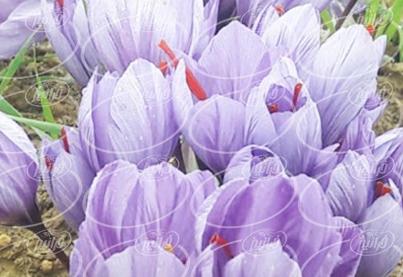 خرید آنلاین اسپری زعفران مصطفوی 110 میلی لیتری