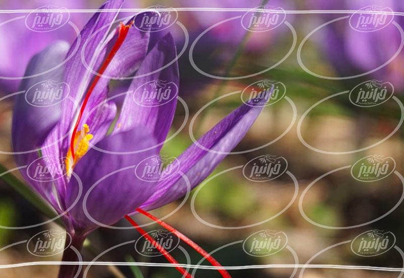 سایت پودر شربت زعفران جدید درجه یک