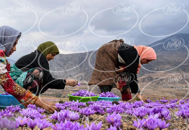مرکز خرید زعفران مایع در تهران