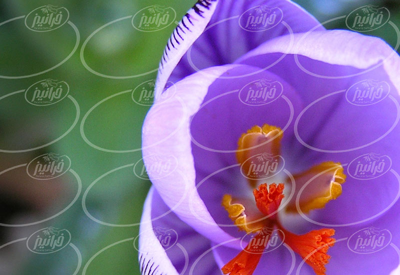 فروش پودر زعفران کیلویی با بسته بندی عالی