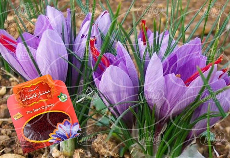 فروختن زعفران پودر شده قائنات در ایتالیا