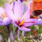 خرید بی وقفه سایت زعفران قائنات