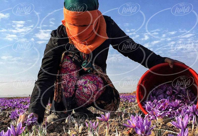 مشخصات و قیمت رنگ طبیعی زعفران